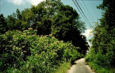 1991o6_1