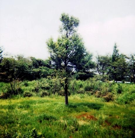 Pola20068114